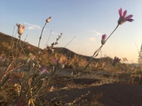 Exploring Armenian flora: flowers at Havuts Tar, Armenia